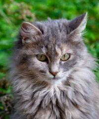 hezká kočička
