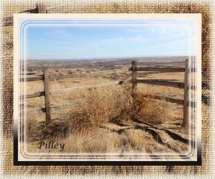 tumbleweeds on the fence