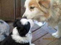 Kwiz giving her Mummy a kiss