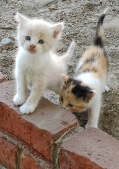 These 2 kittens were a little more curious today,  the other 2 are shy.