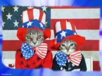 Petey & Pal Wish You a Great July 4th!!