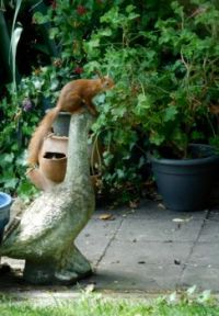 My new little friend, the squirrel, on the goose.