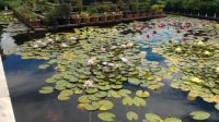 Botanical garden in Kosice, Slovakia