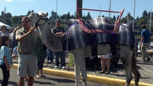 It really is a camel in Olympia