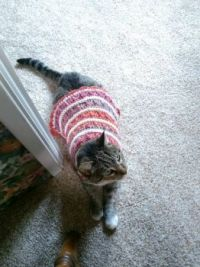 Kitty's new sweater