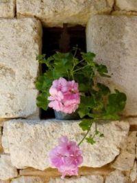 Weathered Stone and Pink Geranium
