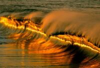 Golden tidal wave is coming