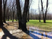 marshy spring