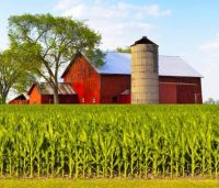 Red Barn By The Corn Field...