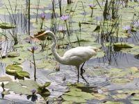 Underwood Wetlands