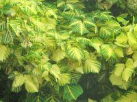 Caribbean plant                                                       202
