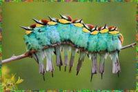 What? Caterpillar?