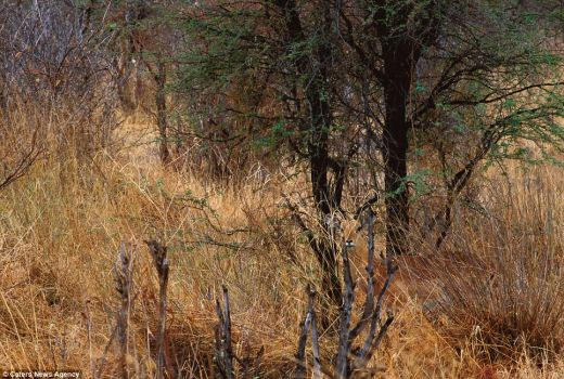 There's an Impala hiding in vegetation...See  him?