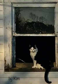 kitty in the window...