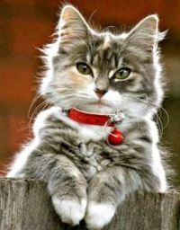Cat with a Red Collar and Bell