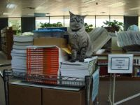 Browser the Cat on guard in Texas library