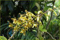 Orchid spray...