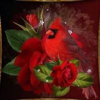 red bird and rose