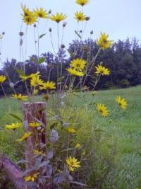 Wildflowers grace the front corner of the hayfield