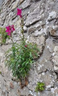 Flowers grow out of the wall