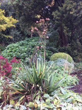 The garden at Benslow
