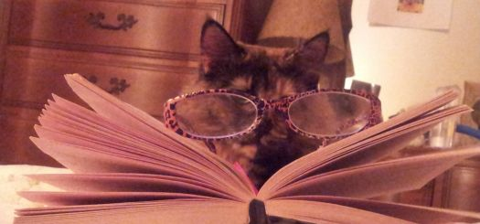 My cat can read