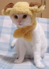 Theme - awww, another cute kitty