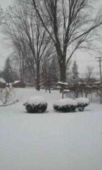Snowy day in Michigan!