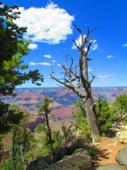 Grand Canyon View (larger)