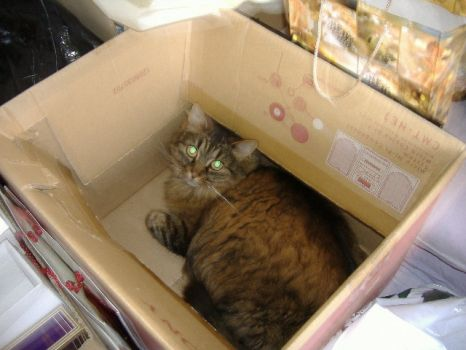 Connie in the Box