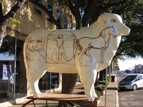 San Angelo Sheep