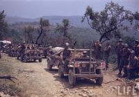 Willys Jeeps WWII
