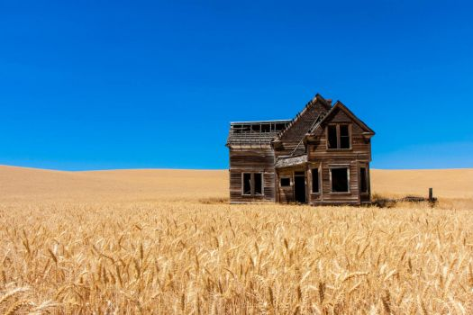 An abandoned home in the middle of a wheat field
