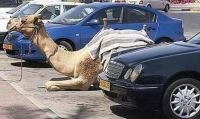 African parking lot