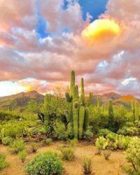 AZ desert sunrise