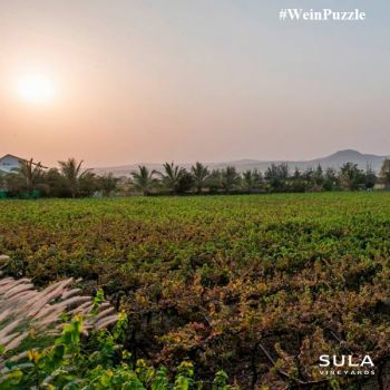 #WeinPuzzle - Sula vineyards (10)