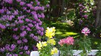 Backyard gardens 1