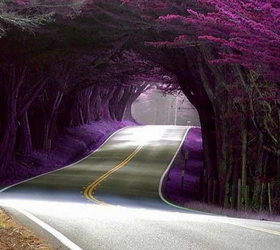 Beautiful Road