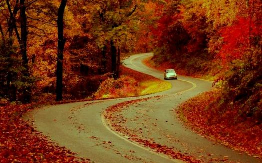 Winding Autumn Road