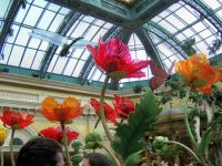 Glass Flowers at the Bellagio