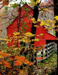 Old red barn..in the fall.....2019
