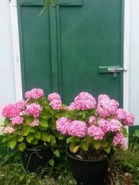 mum's shed door