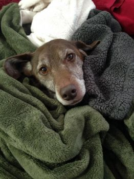 Louis in blankets!