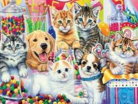 CATS DOGS & CANDY
