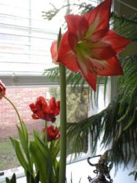 Flower in the window
