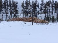 Winter Logging 2