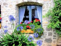 Pretty Cottage Window