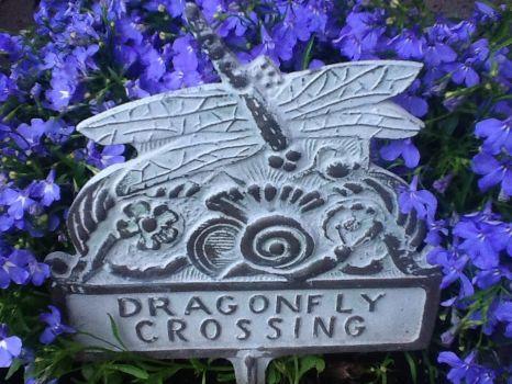 Dragonfly crossing