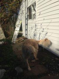 Babe supervising wall job