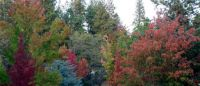 Grass Valley CA Fall Colors 2017